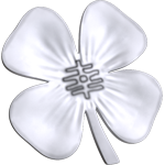 White four-leaf clover